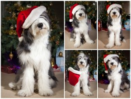A little bit of fun with the pup, and a Santa hat,  to wish everyone a great Christmas.