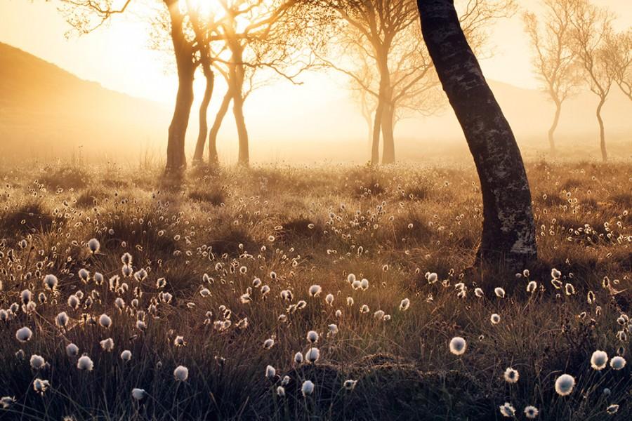 Ryeflat_hills_20150523_0160_web