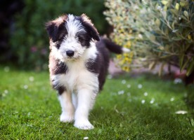 &#8230;Brodie meet Flickr.
